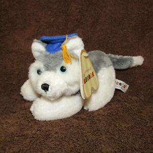NWT Small Plush Siberian Husky Graduation Mascot School colors Blue Gold Samoyed