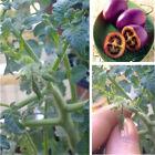 50 Seeds Purple Cherry Tomato Garden Organic Heirloom Fruit Vegetable Plant