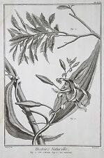 Histoire naturelle ORIG grabado 1760 le cirier la vainilla Vanilla Vaniglia