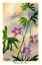 Vintage Postcard by artist Ken Haag Wisconsin State Flower Violet 1967