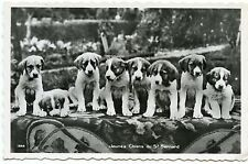 CHIENS . SAINT-BERNARD. DOGS.   CHIOTS. PUPPIES