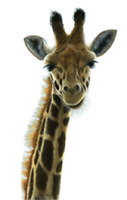 Giraffe t shirt youth toddler girl boy  kid head 4t up adult s m US sz >