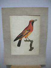 Edizioni Beatrice D'Este Milano Satin Print - Beautiful Bird - NEW in Plastic