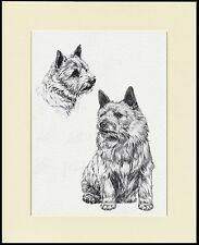 NORWICH TERRIER LOVELY DOG PRINT MOUNTED READY TO FRAME #2