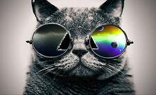 Encadrée Imprimer-Funky cat wearing rétro Shades Lunettes de soleil / (Photo Poster art)