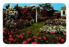 Jackson & Perkins Rose Garden Postcard Newark New York Climbing Blaze Trellis