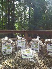5000 Moringa Seed Oleifera SEMILLAS DE MORINGA
