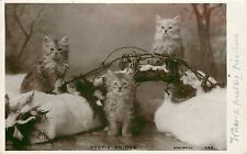 c1910 Rppc Postcard Silver Persian Cats & Kittens on Persian Rug, Posted