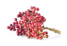 exotische Kräuter Rarität Saatgut seltene Garten Balkon Pflanze SZECHUANPFEFFER