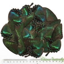 GREEN 352 pcs BUTTERFLY wing jewelry butterfly material ooak fairy DIY artwork