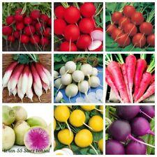 100 Radish Vegetable Seeds Daikon Rare 40 Kinds Annual Organic Plants for Garden