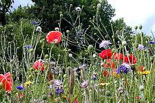 Wildblumen + Wildkräuter über 30 Sorten  Naturgarten Wiese über 500 Samen NEU