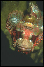 210012 gallineta kimbe Bay Papúa Nueva Guinea A4 Foto Impresión