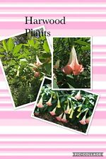 7- 7� Fresh Cutting Butterfly Pink Brugmansia Angel Trumpet Peach Pink Fragrant