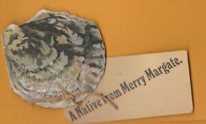 Kent- A Native from Merry Margate.  Novelty Pull out Oyster  Postcard