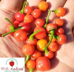 Chilli Wiri Wiri Guyana Pepper Sustainably Grown in Australia 10 Seeds