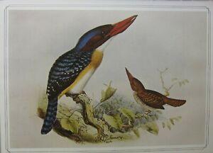 BEAUTIFUL BIRD PRINT ~ BANDED KINGFISHER ~ JOSEPH GERRARD KEULEMANS