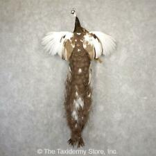 #18925 P+* | Indian Peacock Taxidermy Bird Mount For Sale