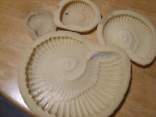 ammonite fossil latex mould pack,,...----/
