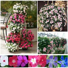 140pcs Periwinkle Catharanthus Good Seeds Flowers Plant Garden Yard Balcony Grow
