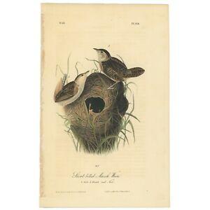 Audubon Octavo 1st Ed 1840 hand-colored litho Pl 124 Short-billed Marsh Wren