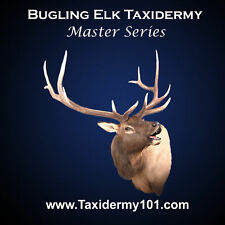 Learn Elk Taxidermy Training on DVD for Beginners - NEW!