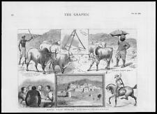 1882-Antiguo impresión Afganistán sur Sungan ganado paraguas caballo (41)