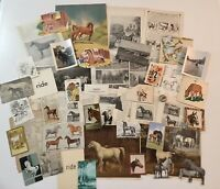 50+ Pc Junk Journal Ephemera Pack Vintage Horse Equestrian Theme All Original