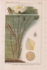 1921 Weisse Seerose Original Buch-Print