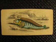 RARE HAND-COLORED FISH ENGRAVINGS 1835-1843 SIR WILLIAM JARDINE GROUP 4