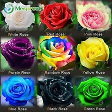 100PCS Flower Seed Holland Rose Seed Lover Gift Orange Green Rainbow RARE 24