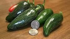25+ Mucho Nacho Jalapeño Hot Pepper Seeds With A Bonus