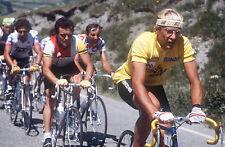 LAURENT FIGNON & BERNARD HINAULT TOUR DE FRANCE 1984 POSTER