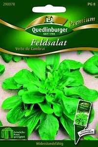 Saatgut - Samen Salat Feld- Verte de Cambrai 290078 Quedlinburger AR5403