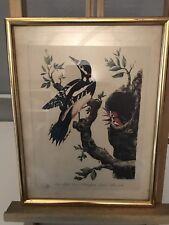 Gravure Ancienne Animaux Oiseaux Picus Mufeo Viri Nobilisfimi Jacobi 31x24cm