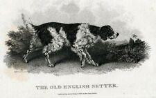 C.1801 English Setter Copper Engraving By John Scott, Artist H.B. Chalon London