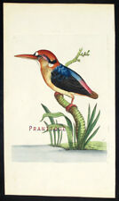 1783,RARE SHAW & NODDER Painted By Hand ENGRAVING RED HEADED KINGFISHER VY5