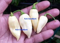 RARE Fatalii White Chilli - A Catastrophic & Ridiculously Hot Chilli - 10 Seeds