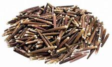 NaDeco® Seeigel Stachel 1kg, ca. 4-8cm | Griffel-Seeigel Stachel | Seeigellanzen