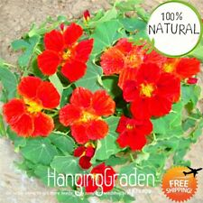 Timelimit Pack Pretty Seeds Plants Hanging Nasturtium Bonsai A Rare 100pcs