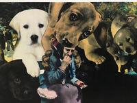"1991 Artist BARRY KITE Signed Print ""Playful Puppies At Aries"" Pop Art, 14""x11"""