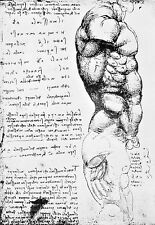 Leonardo Da Vinci Muscles of the Torso  Anatomy Poster Print Art