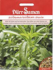 Stevia süßkraut süßblatt miele crauti Stevia rebaundiana Dürr semi