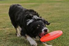 Jouets frisbees pour chien