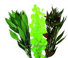 Aquariumpflanzen Set 3 XXL Bunde (2€/Stk.), Wasserpflanzen, Aquarienpflanzen