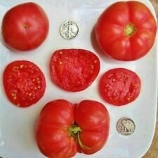 Fordhook First - Quality Slicer - 40 Seeds - Buy any 3 varieties, get 1 free!