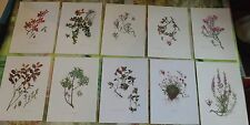 10 Ancienne Gravures Planches 1960 Airelle Rouge,des Marais,Azalée des Alpes