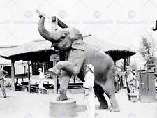 CIRCUS VINTAGE PHOTO ELEPHANT ACT TRAINING HISTORIC INDIA PRINT POSTER BB7713