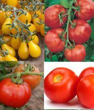 Graines bio de tomates en mélange