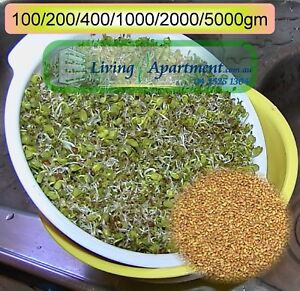 Alfalfa seeds ( Sprouts , Sprouting seeds )